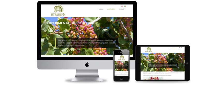 Website design for a Tuscan olive oil company
